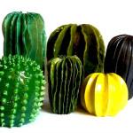 Lina Cofán's Ceramic Plants