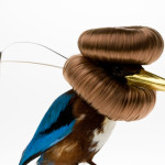 Karley Feaver's Assemblage Taxidermy