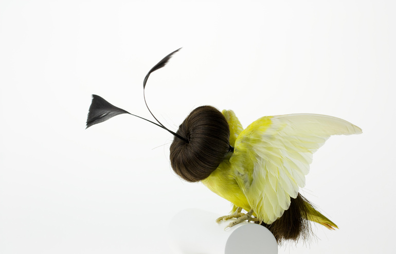 Karley Feaver - Taxidermy