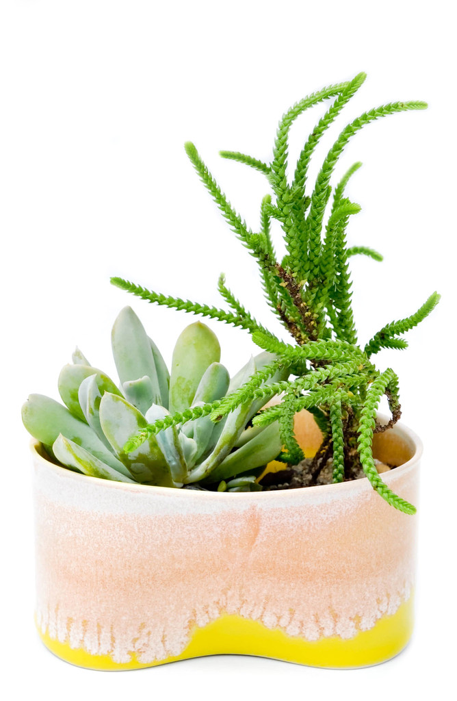 Pinched and Glazed Planter  from Leif shop