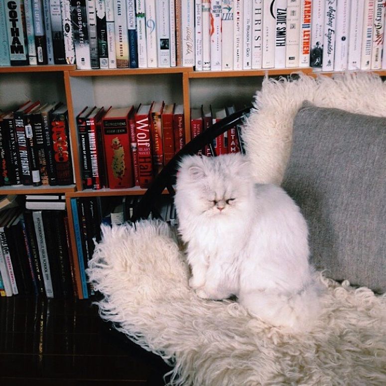 ll_cat