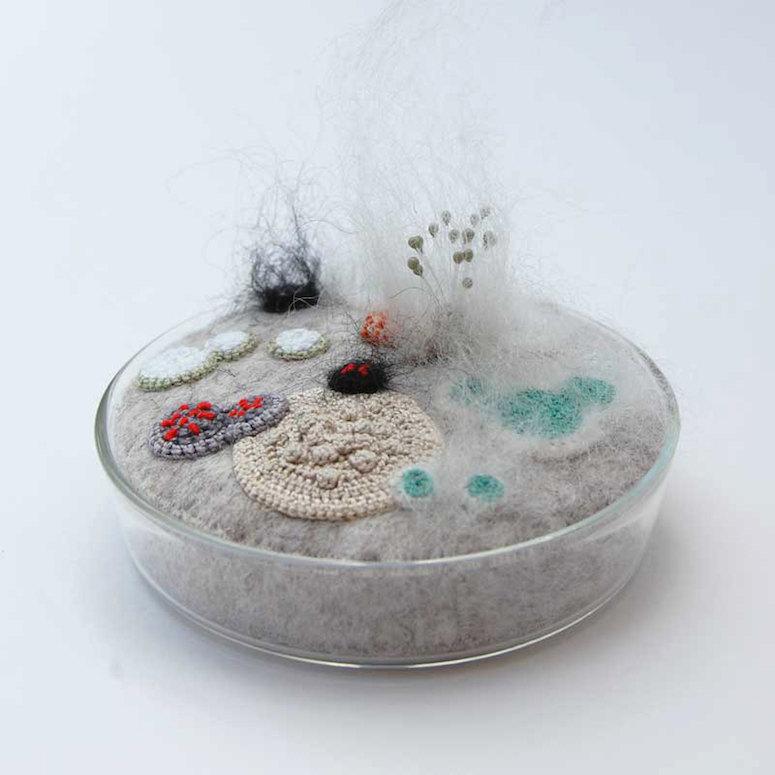 Elin Thomas Makes Moldy Petri Dishes Look Cuddly