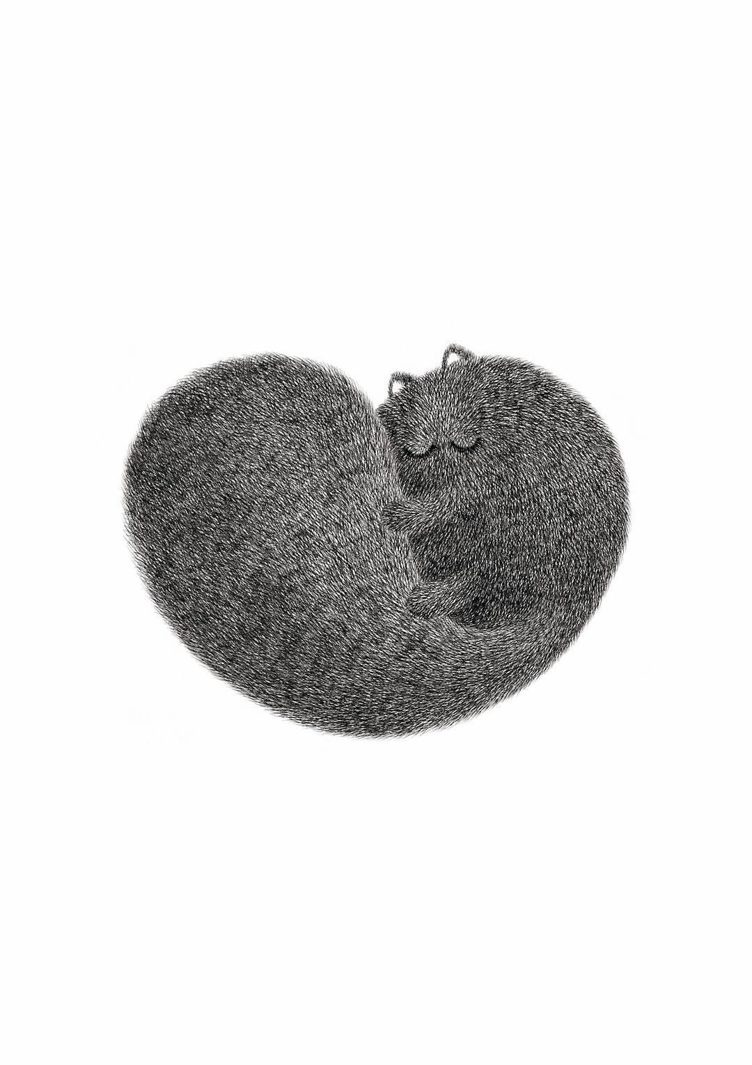 Fluffy cat illustration by Kamwei Fong