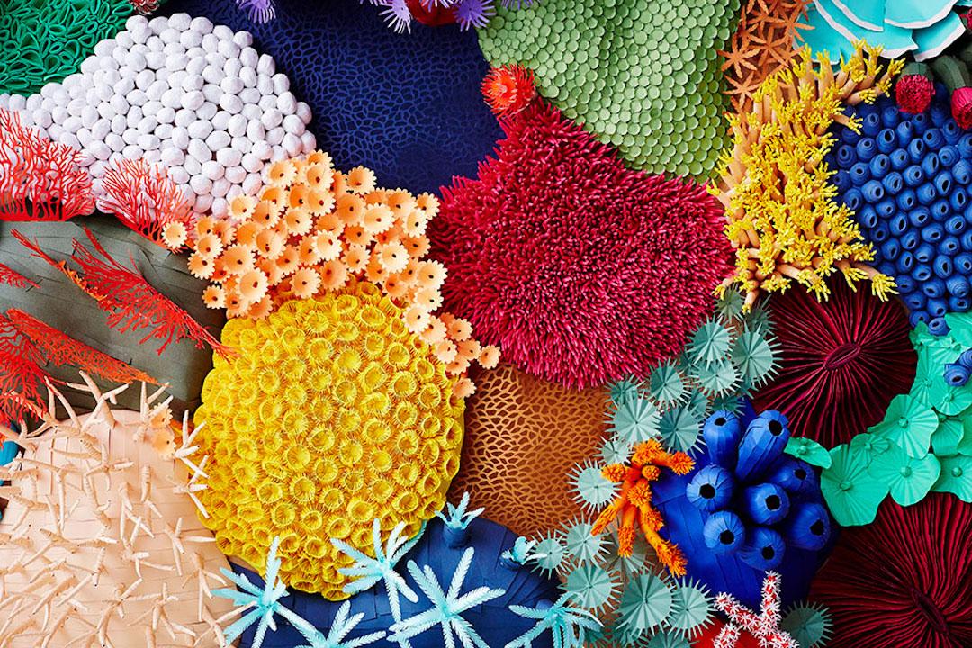 Coral Reef Crafts Pinterest