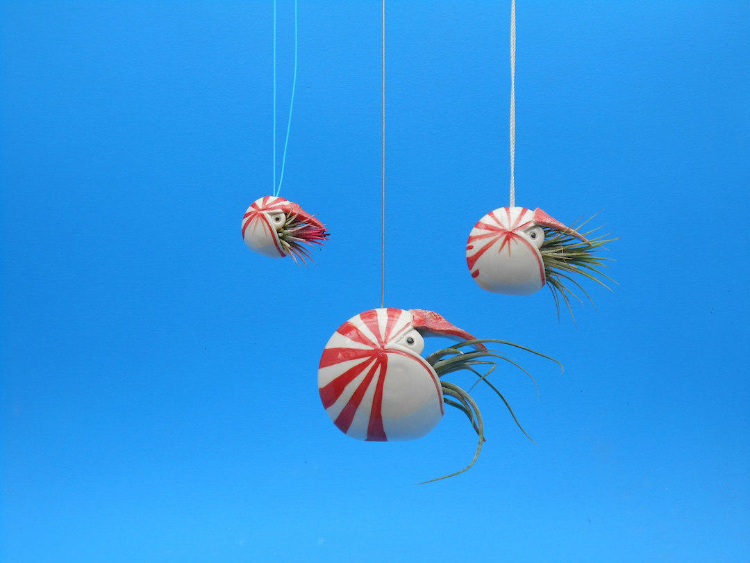 Go Under The Sea With Adorable Ceramic Air Plant Holders