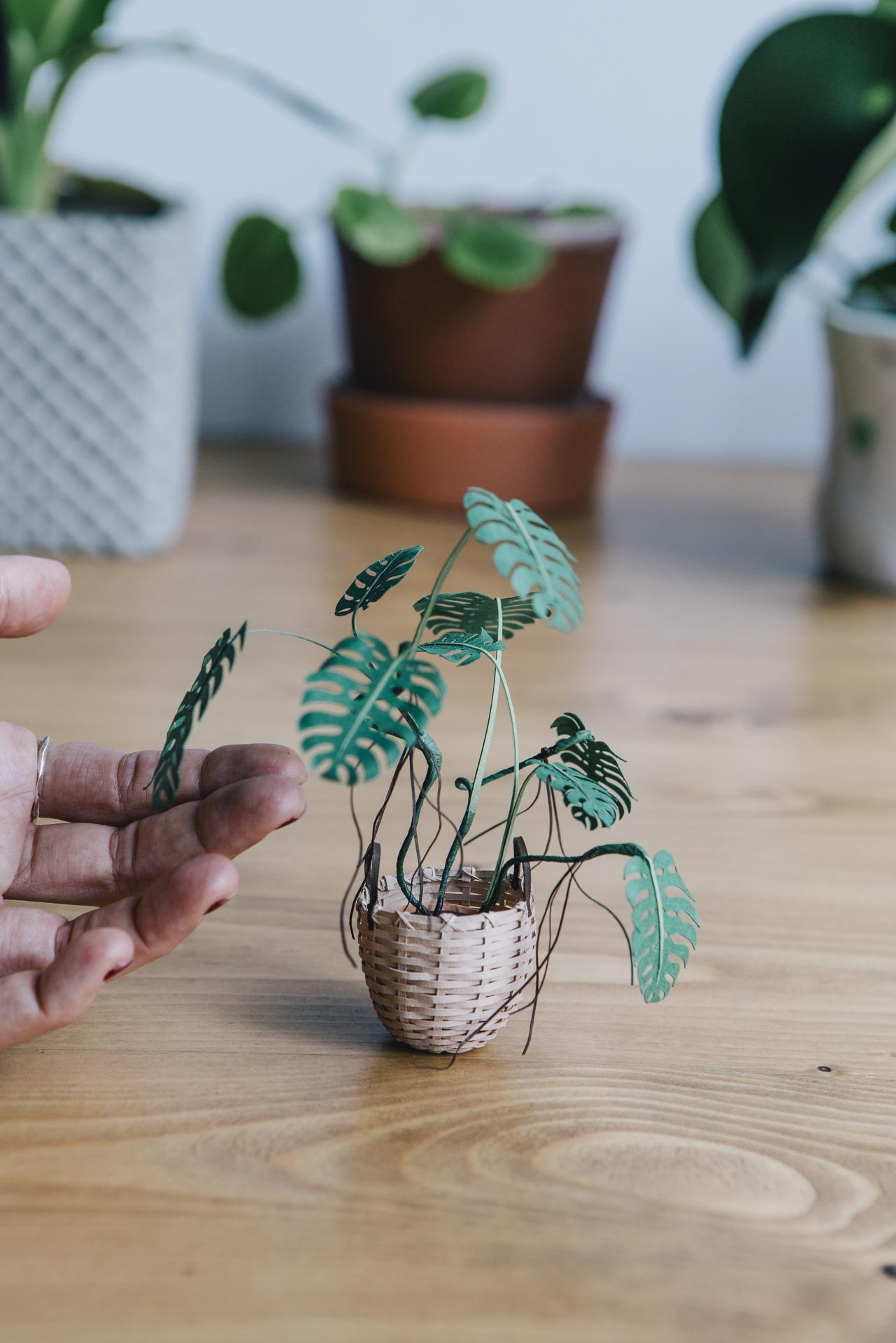 Paper plants by Raya Sader