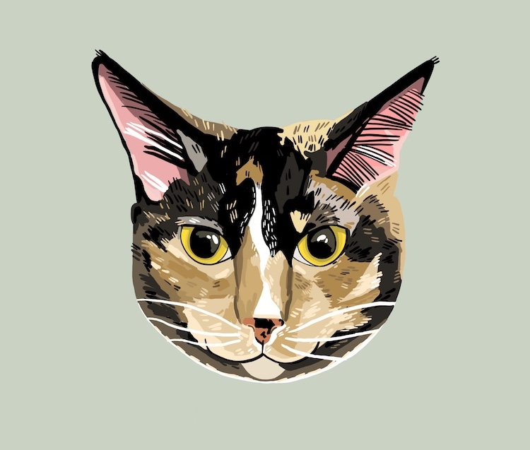 Digital pet portrait of a cat illustrated by Sara Barnes / Brown Paper Stitch